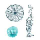 Sea urchin drawing on white background. Hand drawn seafood illustration. Sea urchin drawing on white background. Hand drawn outline seafood illustration Stock Photo