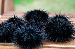Sea urchin, echinus Royalty Free Stock Photos