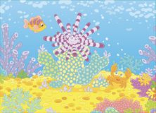 Sea Urchin, Fish and Crab. Striped long-spine urchin, a funny small crab and a colorful fish among corals on a reef in a tropical sea, vector illustration in a Royalty Free Stock Photography