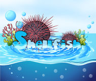 Sea urchin floating on water Stock Image
