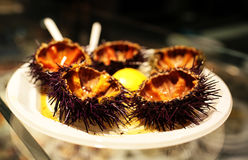 Sea urchin plate Stock Photography