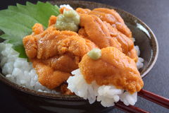 Sea urchin rice bowl Stock Images