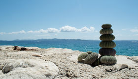 Sea urchin on rock with sea in background Royalty Free Stock Photography