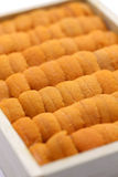Sea urchin roe, japanese sushi and sashimi ingredients Royalty Free Stock Photo