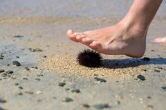Sea  urchin on a sand Royalty Free Stock Photography
