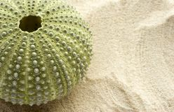 Sea Urchin and Sand Royalty Free Stock Photos