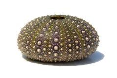 Sea urchin shell Royalty Free Stock Photos