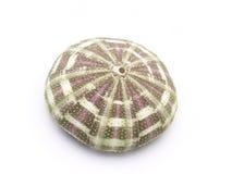 A Sea Urchin Shell Royalty Free Stock Photos
