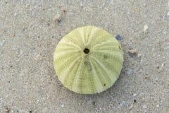 A Sea Urchin Shell Stock Photos