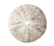 Sea urchin shell. Royalty Free Stock Photos