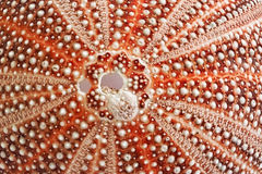 Sea Urchin Shell - Patterns In Nature Stock Images