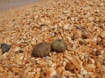 Sea urchin shell on sand Stock Image