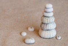 Sea urchin shells Stock Photography