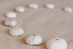 Sea urchin shells Stock Image