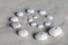 Sea urchin shells Royalty Free Stock Photography