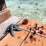 Sea urchin and starfish Stock Photography
