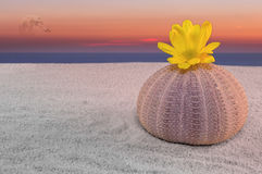 Sea urchin and sunset Royalty Free Stock Photo