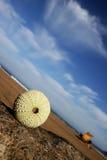 Sea Urchin Vista stock image