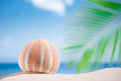 Sea urchin  on white sand beach Stock Photography