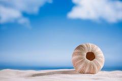 Sea urchin  on white sand beach Royalty Free Stock Photos