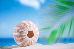Sea urchin  on white sand beach Royalty Free Stock Photography
