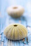 Sea urchins stock photos