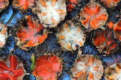 Sea urchins. A platter of freshly opened sea urchins Royalty Free Stock Images