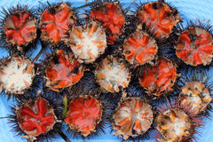Sea urchins. A platter of freshly opened sea urchins Stock Image
