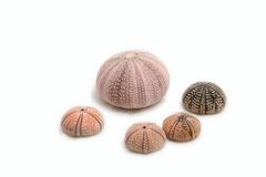 Sea Urchins Royalty Free Stock Image