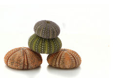 sea urchins in balance Royalty Free Stock Images