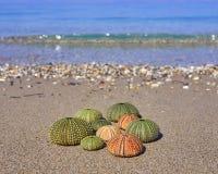 Sea urchins on the beach Royalty Free Stock Photos