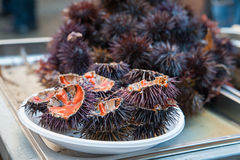 Sea urchins Stock Images