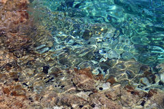 Sea urchins in Gerona. Sea urchins in the sea in Gerona Royalty Free Stock Photos