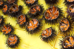 Sea urchins in Greece. Stock Photos
