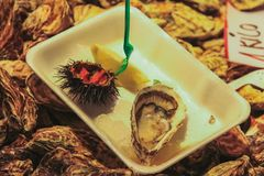 Sea urchins and oysters with lemon royalty free stock images