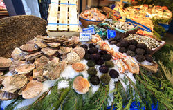 Sea urchins and scallops stall. Sea food market stall in Paris - sea urchins and scallops exposed on ice and weeds Stock Photography