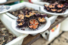 Sea urchins seafood Stock Photo