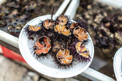 Sea urchins seafood Royalty Free Stock Images