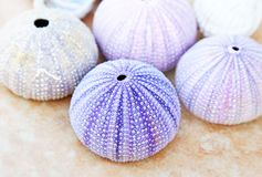 Sea urchins shells fro Aegean sea Greece. Colorful shells of sea urchins from Aegean sea Greece stock photos