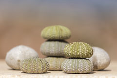 Sea urchins, shells Stock Photos