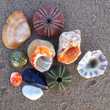 Sea urchins and shells on wet sand Royalty Free Stock Photos