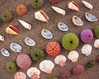 Sea urchins and shells on wet sand Stock Images