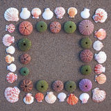 Sea urchins and shells on wet sand frame Stock Image