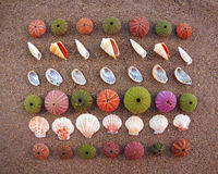 Sea urchins and shells on wet sand Royalty Free Stock Image
