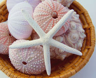 Sea urchins and starfish in basket Stock Images