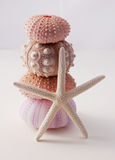 Sea urchins and starfish beach decor Stock Photography