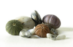 Sea urchins and stones royalty free stock image