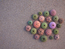 Sea urchins on wet sand, room for typing Stock Image