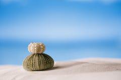 Sea urchins  on white sand beach Stock Photos