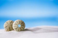 Sea urchins  on white sand beach Royalty Free Stock Photos